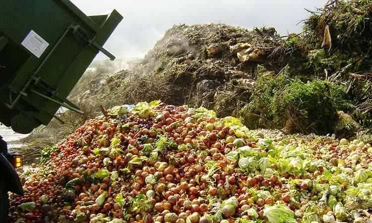 Aceites vegetales y ligninas y celulosas son las principales materias primas investigadas en DICKENS para obtener biopolímeros termoestables y termoplásticos; en BiopAgro se desarrollan bioplásticos a partir de subproductos agroalimentarios.